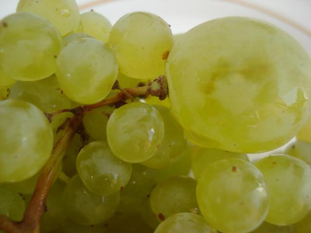 Du raisin pour tous les ages Raisin12