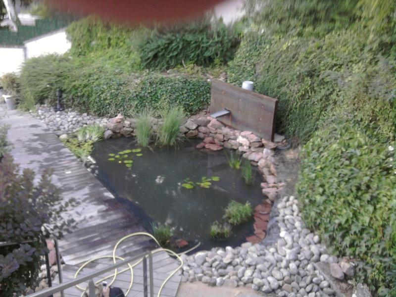 Mon bassin refait .... Photo010