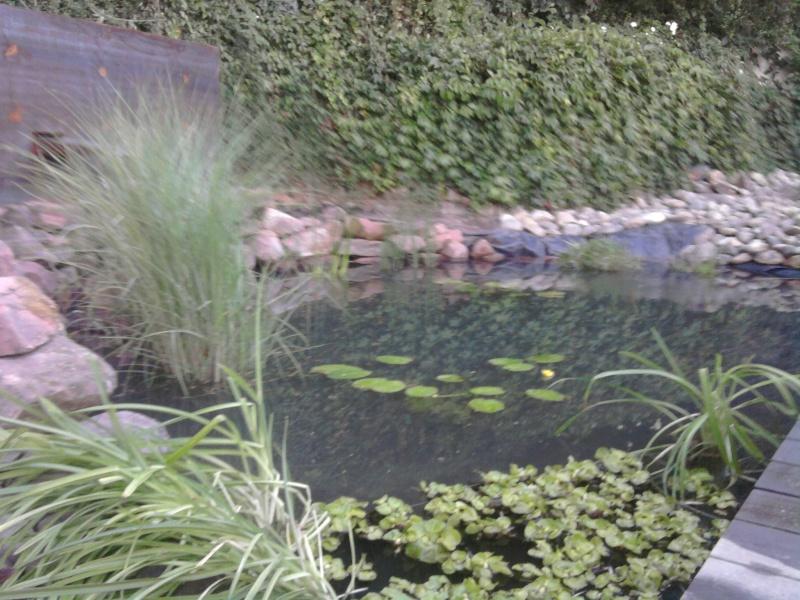 Mon bassin refait .... Photo011