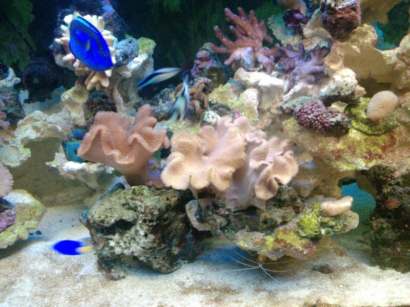 mon aqua recifal P2320011