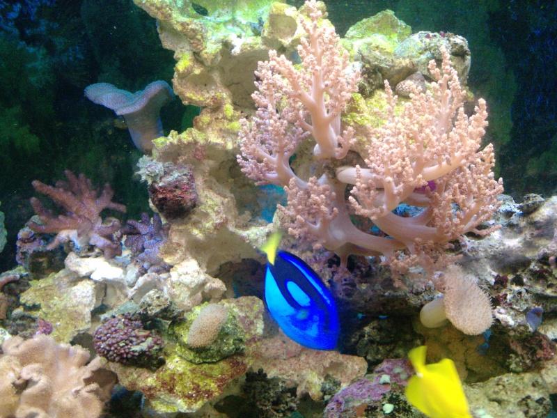 mon aqua recifal P2320012