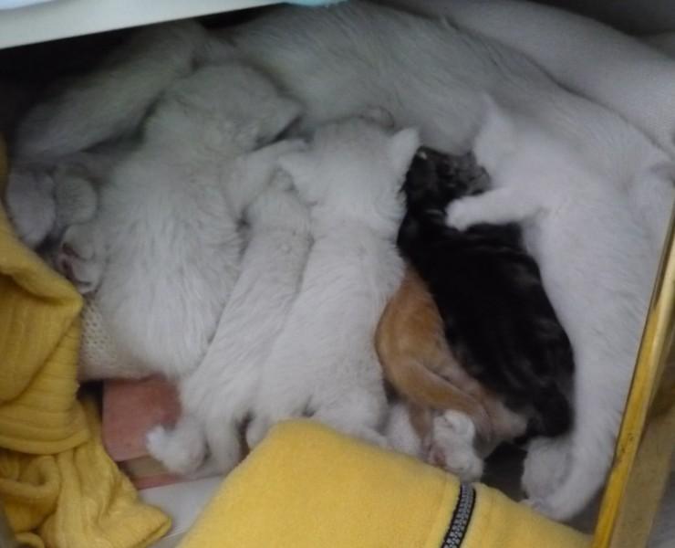 6 chatons de ?2semaines trouvé dans ma garde robe!!!!!! Screen10