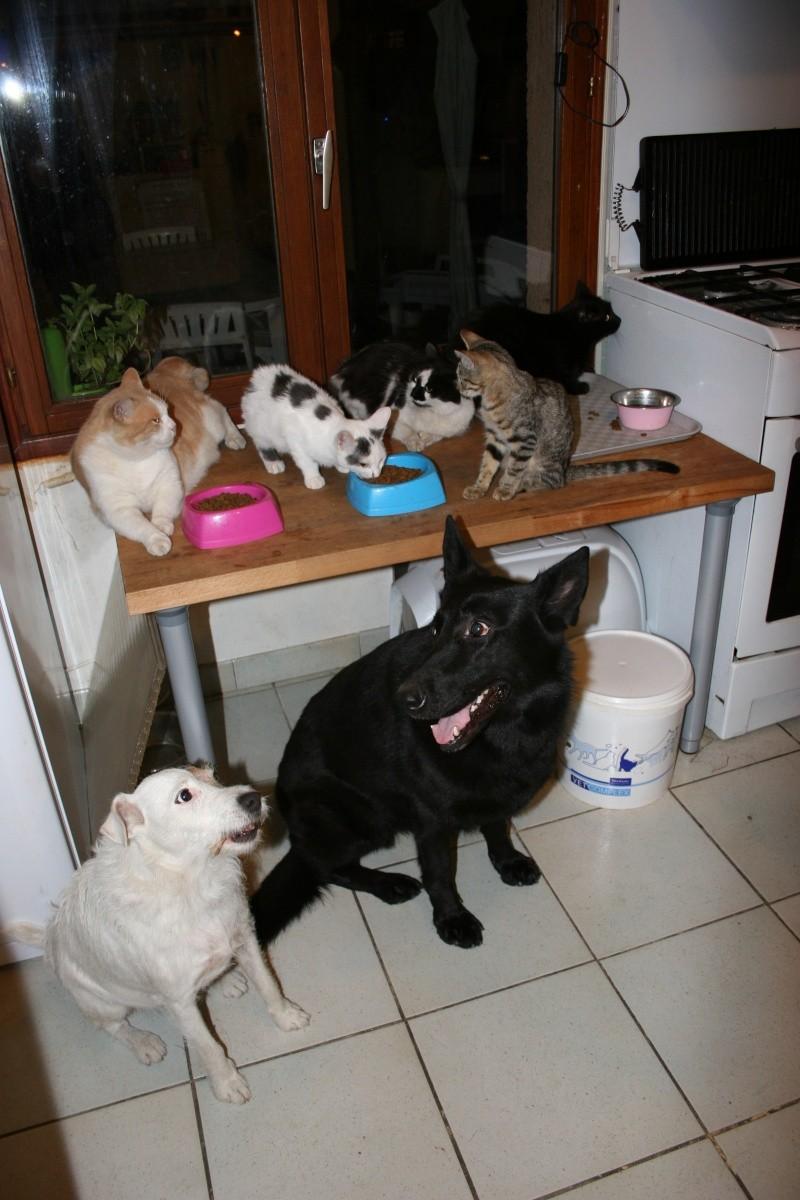 Comme chiens et chats.... Chats_10
