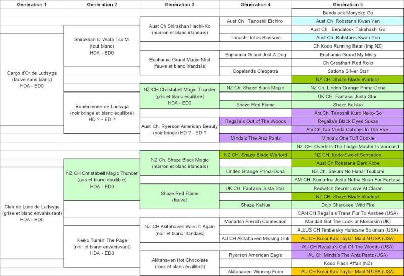 11e Portée de Ludsyga : Maya x Syrius (18/11/09) - pour les maitres de Maya Ped5_m10