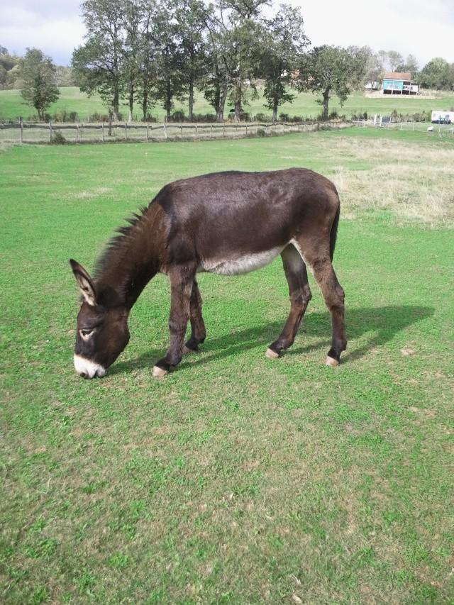 BOURRIFEE, renommée JOSETTE (dite PÉPÉTTE) - ONC âne née en 2010 - adoptée en août 2011 par Stephele12 - Page 2 Photo012