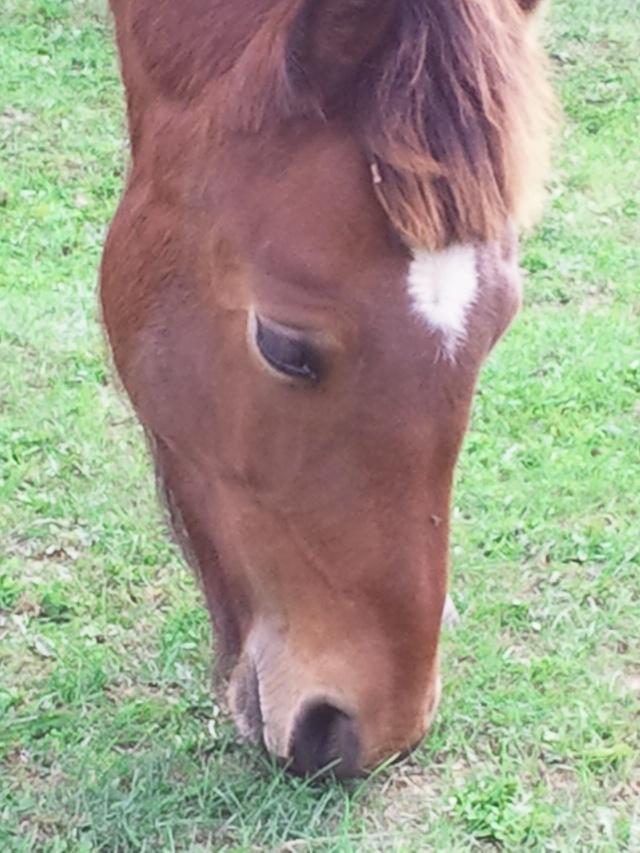 BOURRIFEE, renommée JOSETTE (dite PÉPÉTTE) - ONC âne née en 2010 - adoptée en août 2011 par Stephele12 - Page 2 Photo013