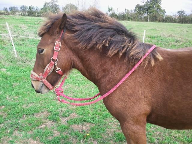 BOURRIFEE, renommée JOSETTE (dite PÉPÉTTE) - ONC âne née en 2010 - adoptée en août 2011 par Stephele12 - Page 2 Photo014