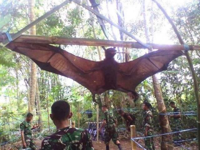 Capturan murciélago gigante en Perú  Muerci10