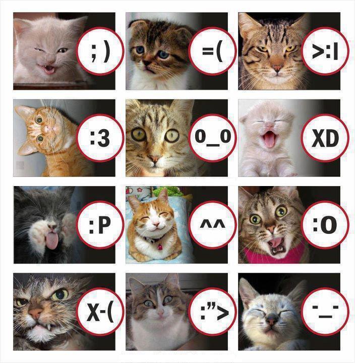 Kleine Smileykunde ;) Katzen10