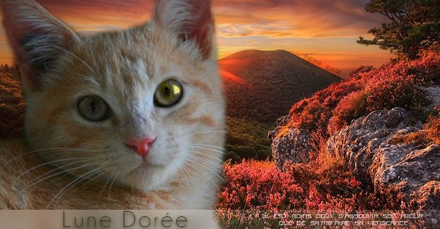 Lune Dorée=> Clan du Tigre => Femelle Signa_21