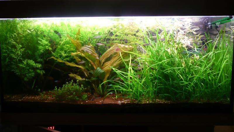 JUWEL 300L amazonien, dernières photos/vidéo page 22 - Page 10 P1100911