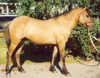 Лошадь в деревне и в отшельничестве Ddnddn13