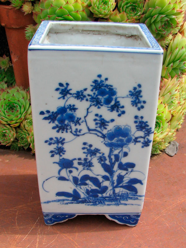 bonsai mame  Pot2_j10