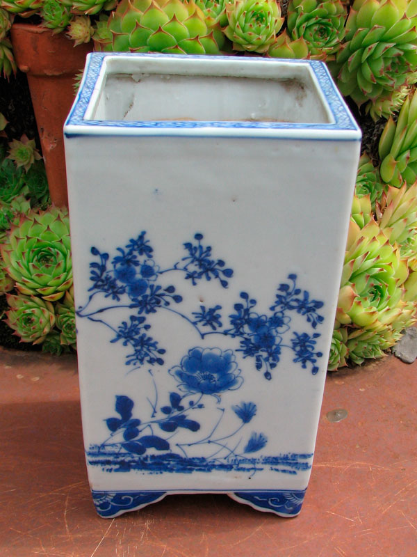 bonsai mame  Pot3_j10