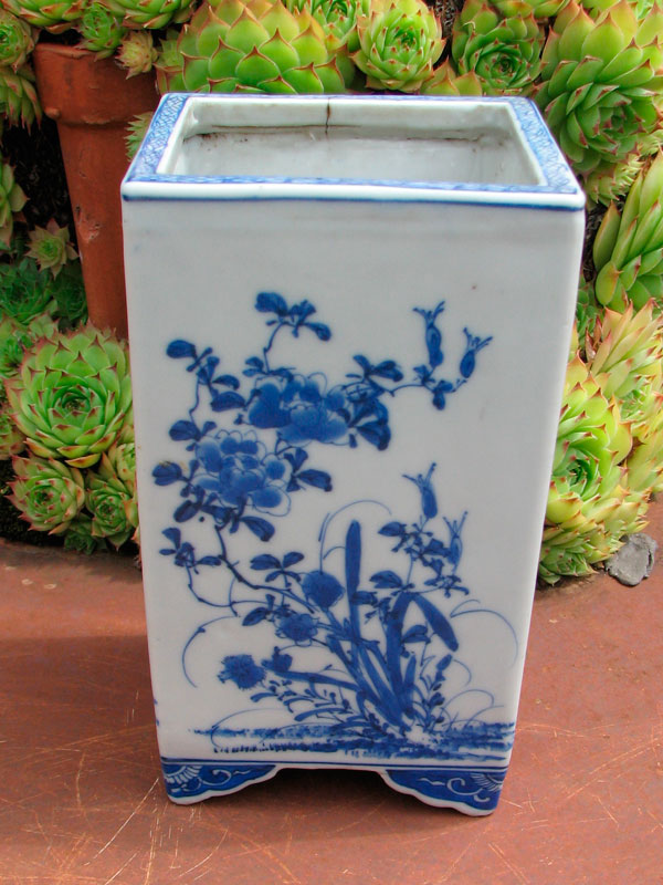 bonsai mame  Pot4_j10