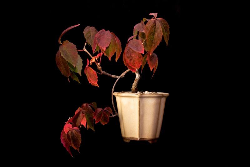 couleurs d'automne Vigne110