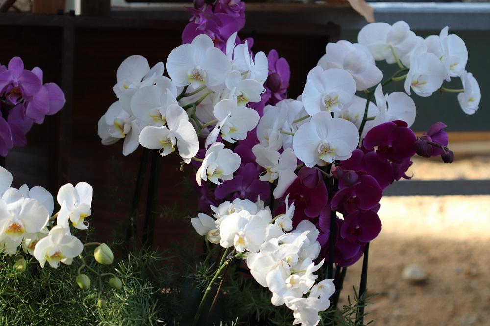 Jardin botanique BORDEAUX le 30/09/2018 Acte 1 Bx111
