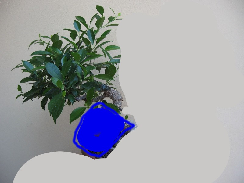 Ficus Retusa....lo abbasso ?? - Pagina 2 Img_7811
