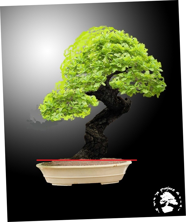 Quercus cerris - Pagina 2 Querci14