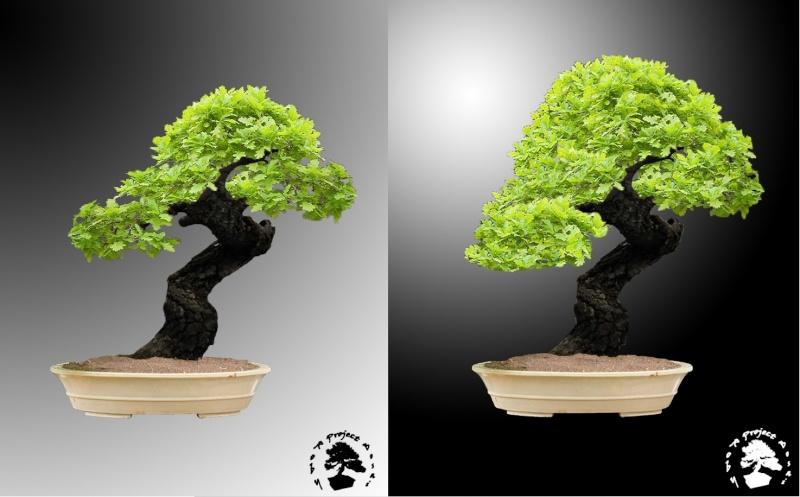 Quercus cerris - Pagina 2 Querci15