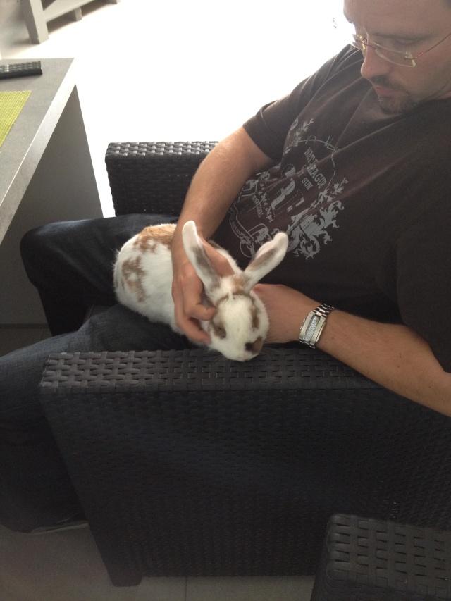 Nina, lapine bélier, née en aout 2011 - Page 3 Img_1810
