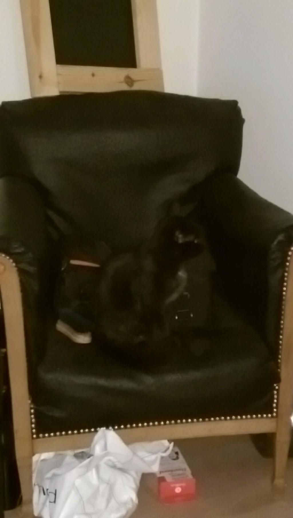 Clochette, femelle type européenne noire angora née 1er mai 2017  - Page 2 Imag0010