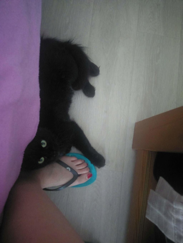 Clochette, femelle type européenne noire angora née 1er mai 2017  - Page 3 Imag0026