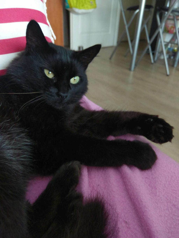 Clochette, femelle type européenne noire angora née 1er mai 2017  - Page 3 Imag0029