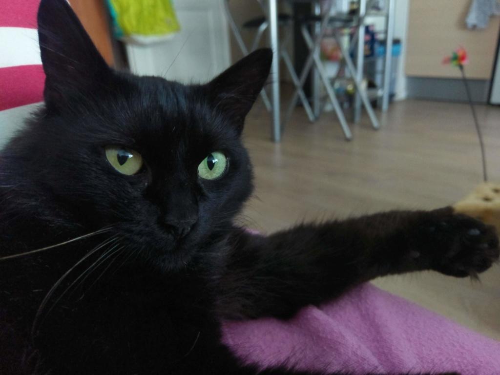 Clochette, femelle type européenne noire angora née 1er mai 2017  - Page 3 Imag0031