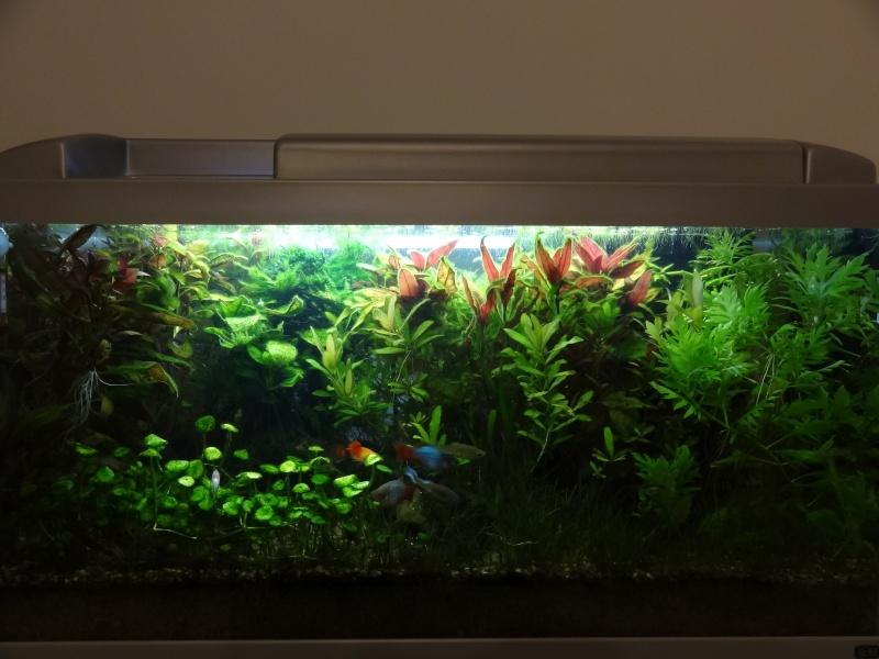 Nouveau Bac 100L avec Plantes sur sol Aquasable Dsc03910