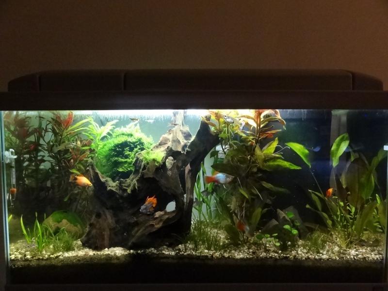 Nouveau Bac 100L avec Plantes sur sol Aquasable Dsc03911