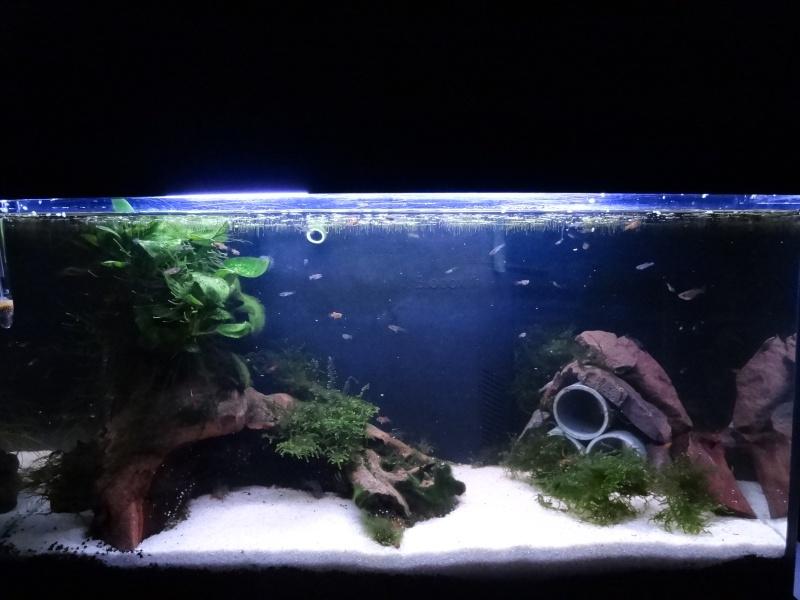 Nouveau Bac 100L avec Plantes sur sol Aquasable Dsc04016
