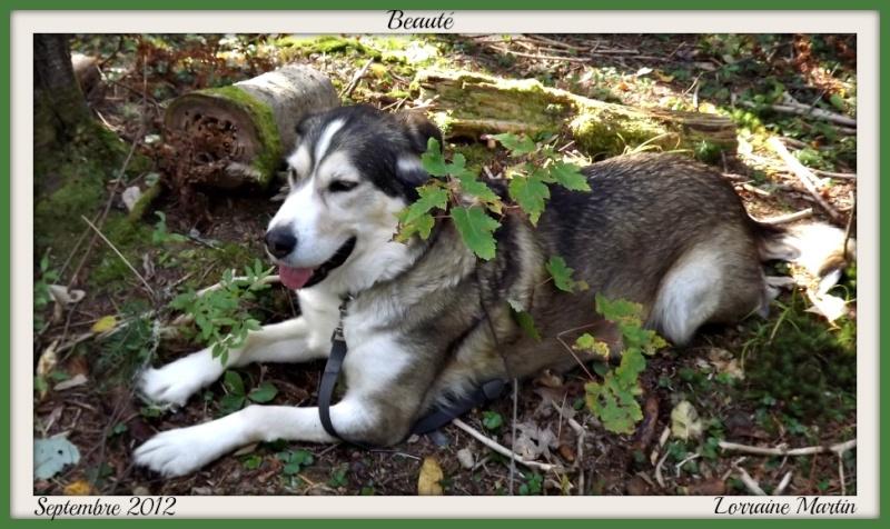 """Mon chien """"Beauté"""" Dscf5410"""
