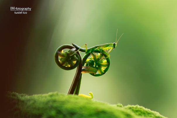 Nouveau cycliste ... Image-10