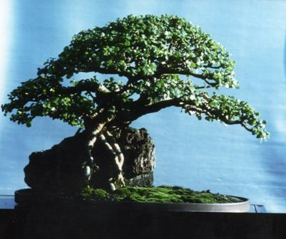 Adding waterfall to penjing experiment Portul10