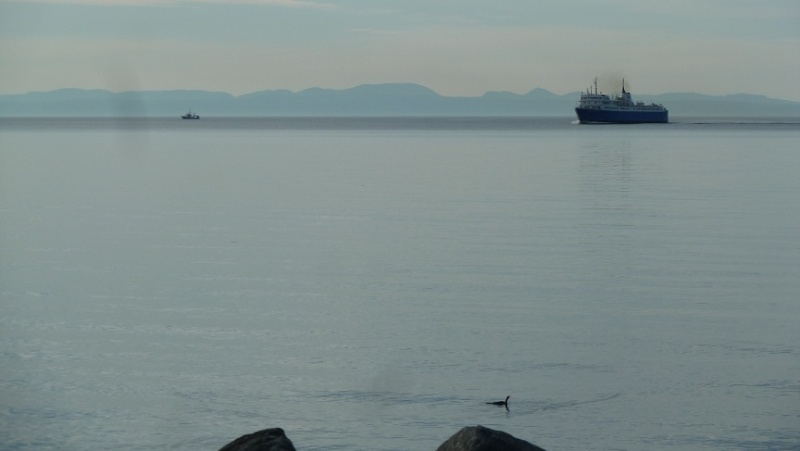 Vacances en Gaspésie avec 1200 photos ... P1070213