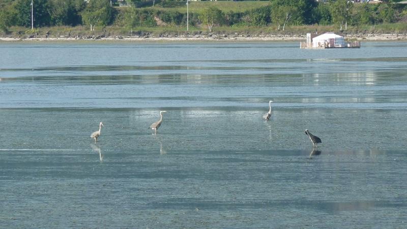 Vacances en Gaspésie avec 1200 photos ... P1070220