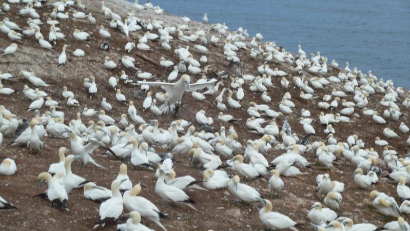 Vacances en Gaspésie avec 1200 photos ... P1070610