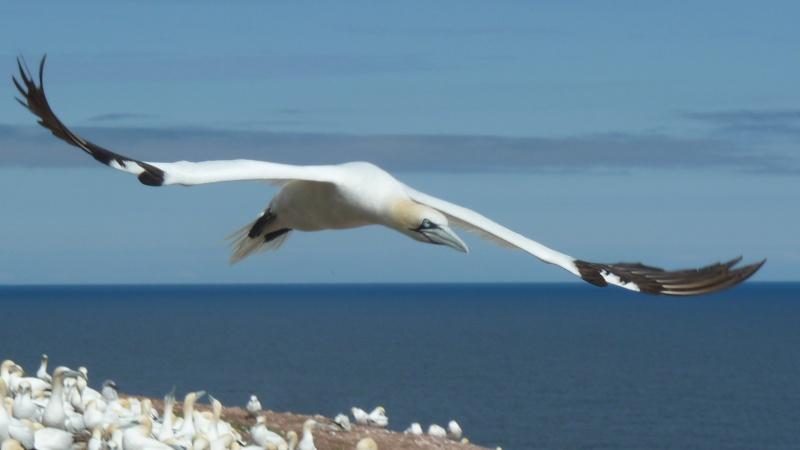 Vacances en Gaspésie avec 1200 photos ... P1070710