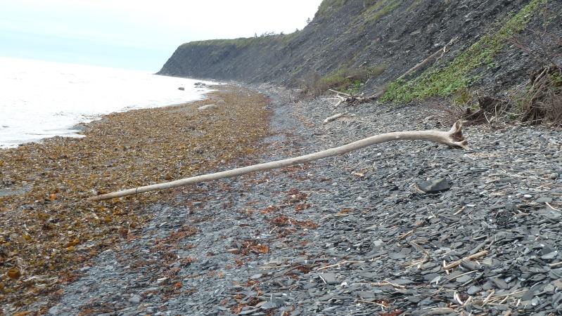 Vacances en Gaspésie avec 1200 photos ... P1070913