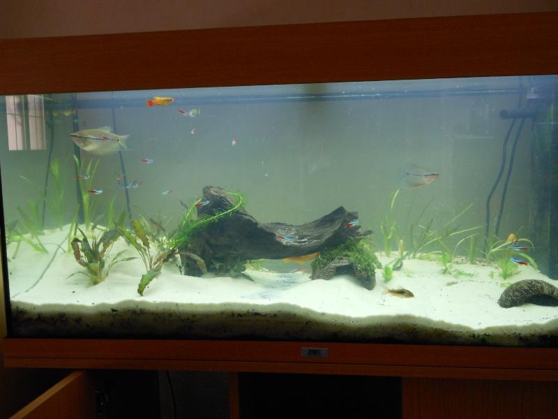 aquarium juwel 180 Dscn0110