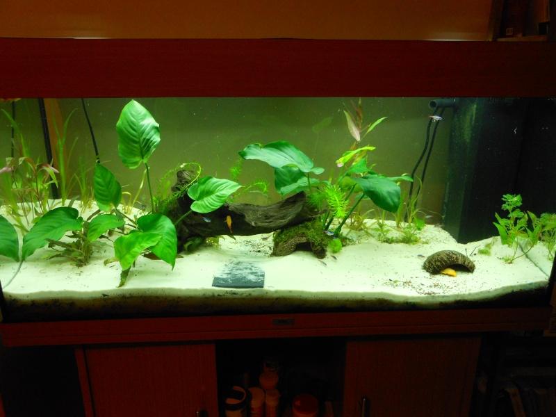 aquarium juwel 180 Dscn0112