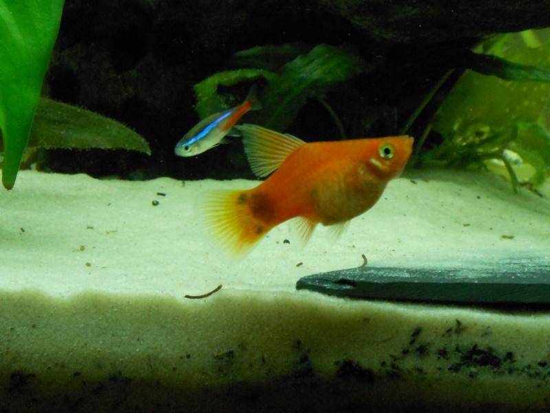 aquarium juwel 180 Dscn0113