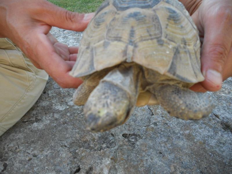 identification espèce et sexe Dscn2733