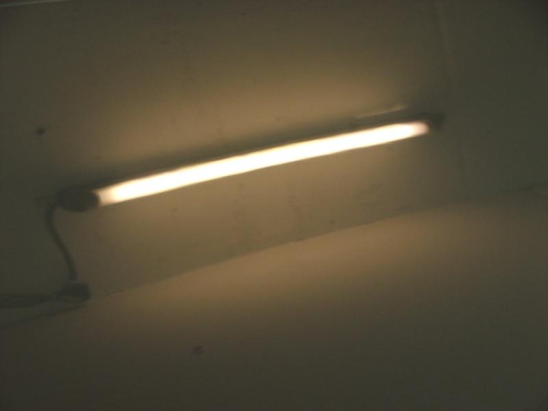 vernice ondulata Dscf2512