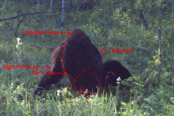 New Footage: A Trapper In Alberta Canada Took This Amazing Photo Of Bigfoot Albert11