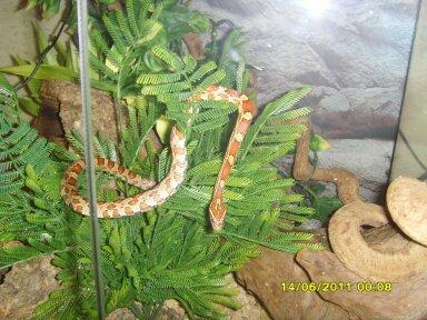 photos de mes reptiles.. 13430810