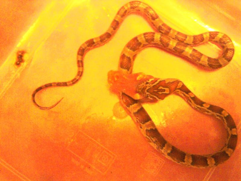 photos de mes reptiles.. 2011-010