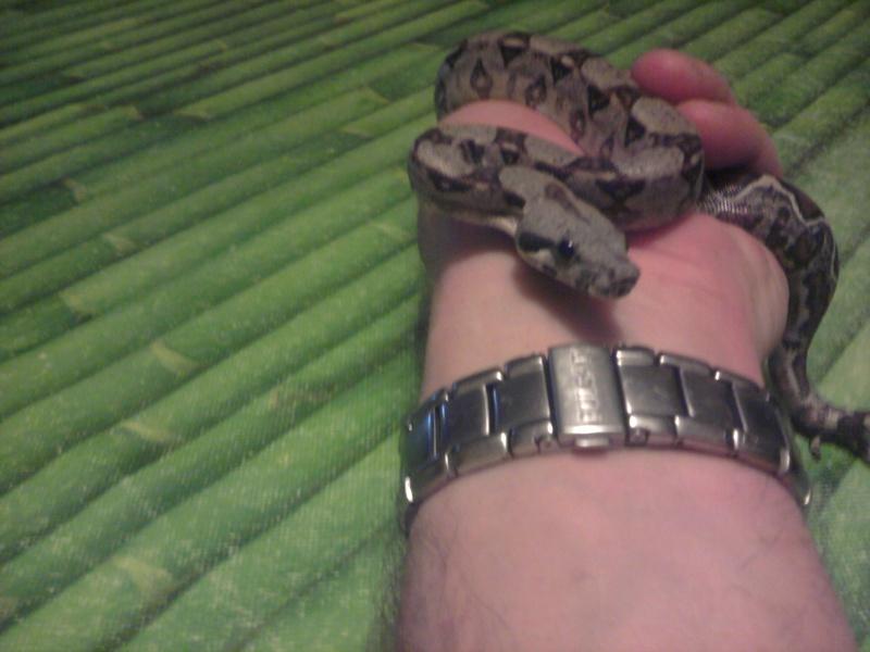 photos de mes reptiles.. 2012-014