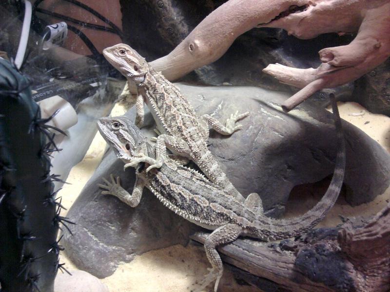 photos de mes reptiles.. 2012-016
